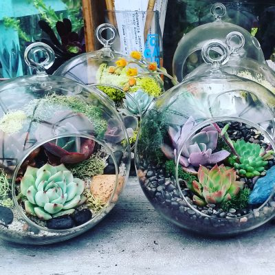 Succulent Workshop Instructor Needed - Will Train!