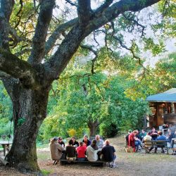 Sonoma County Writers Camp