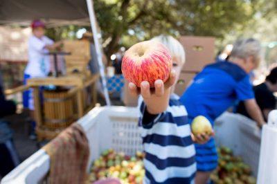 VENDOR OPPORTUNITY: Gravenstein Apple Fair